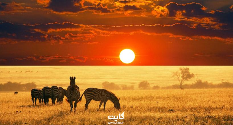 حیات وحش آفریقا | آشنایی با حیوانات مختلف در آفریقا