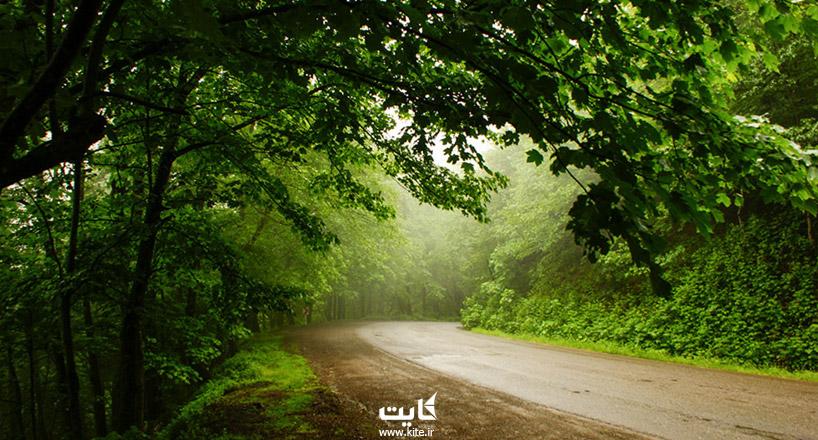 جذابترین جادههای درختی ایران   12 جاده سبز با درختان درهمتنیده