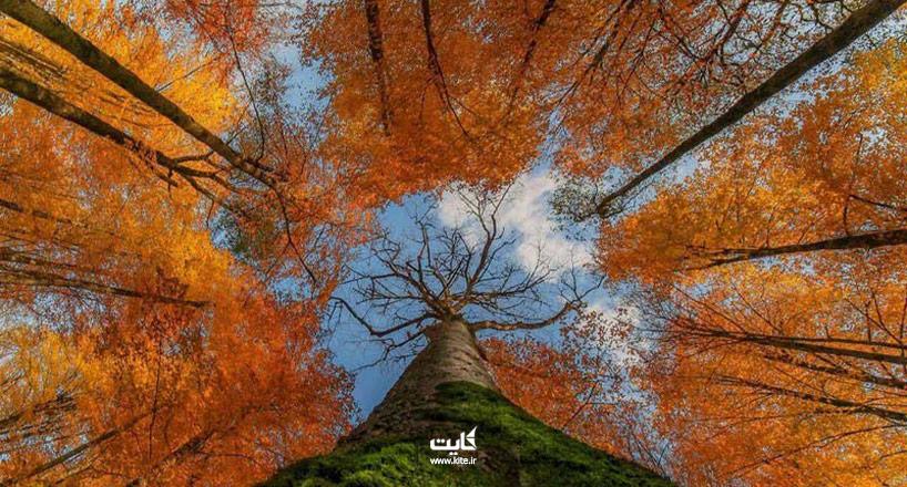 جنگل رآش زیباترین جنگل ایران در فصل پاییز را میشناسید