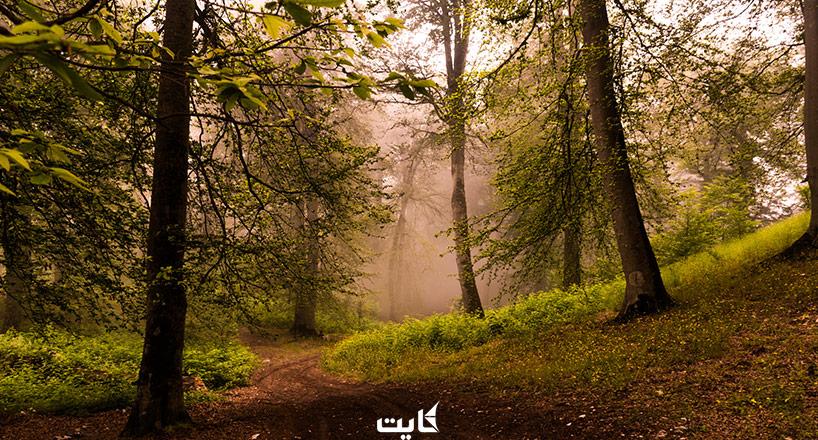 جنگل نوردی  راهنمای جنگل نوردی در ایران و لوازم مورد نیاز