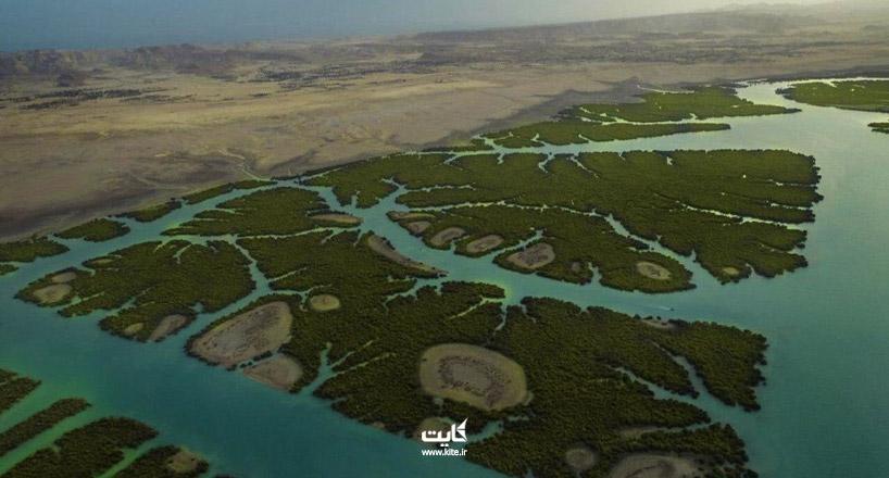 جنگل های حرا جزیره هرمز | سفر به دل جنگل بر روی آب