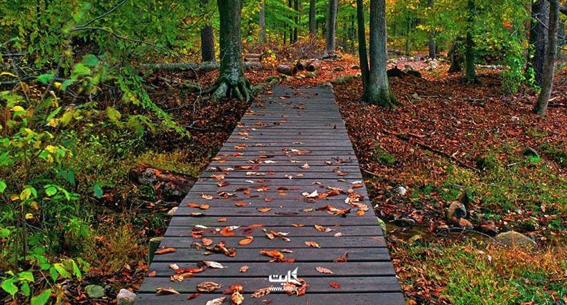 جنگل گیسوم کجاست؟ آشنایی با جنگل گیسوم و راهها دسترسی
