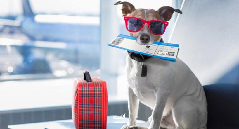 قوانین حمل حیوانات خانگی با هواپیما