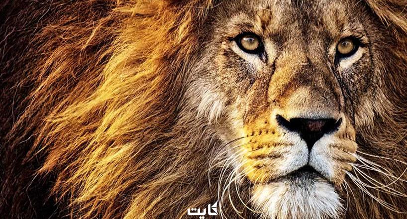 نماد حیوانی کشورها   کشورها را با چه نمادی میشناسند؟