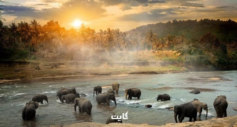 بهترین شهرهای سریلانکا | کدام شهر را برای سفر خود انتخاب کنیم؟