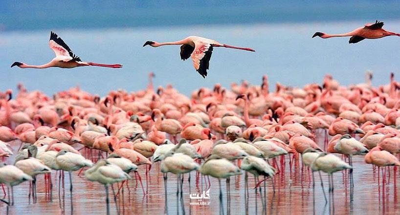 تالاب میانکاله ، بهشت پرندگان ایران
