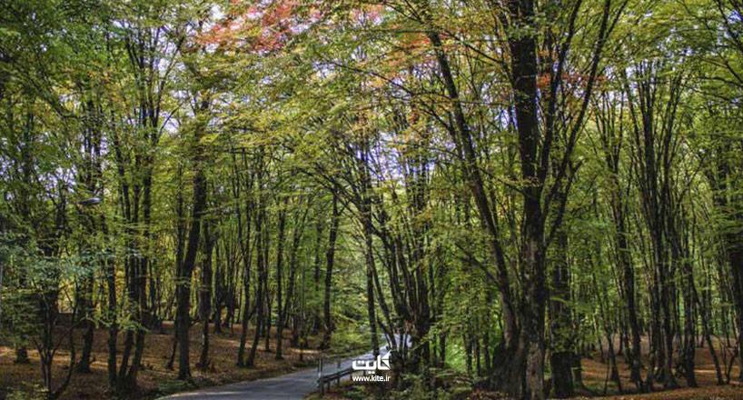 جنگل النگدره یکی از 7 منطقه برتر طبیعت گردی ایران