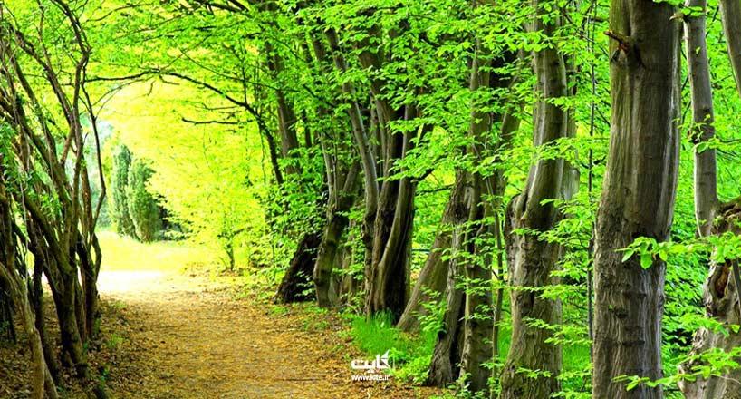 معرفی بهترین مناطق جنگلی برای سفر