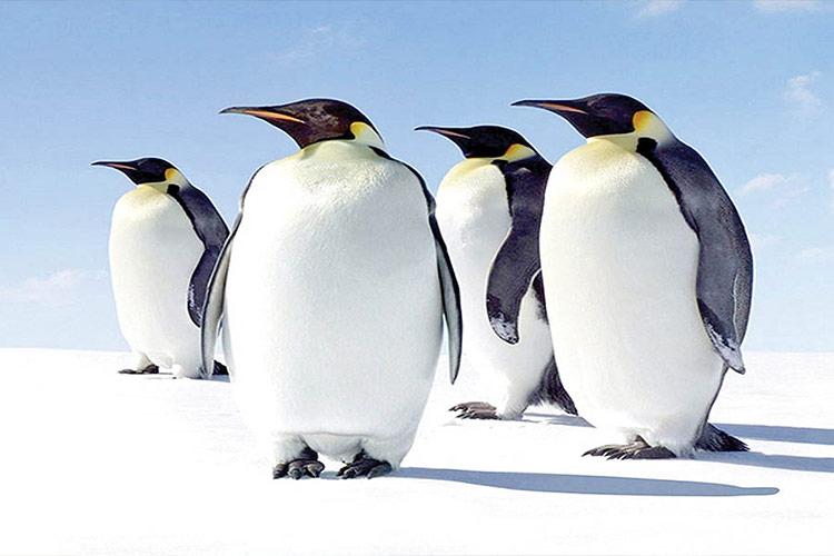 آنتارکتیکا--جنوبگان
