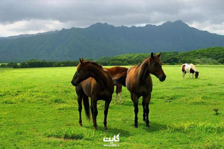 اسبهای-اصیل-ترکمن