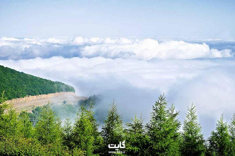 جنگل-ابر-شاهرود