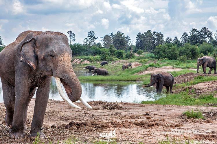 بازی-با-فیلها-در-سفر-به-پوکت-با-کودکان