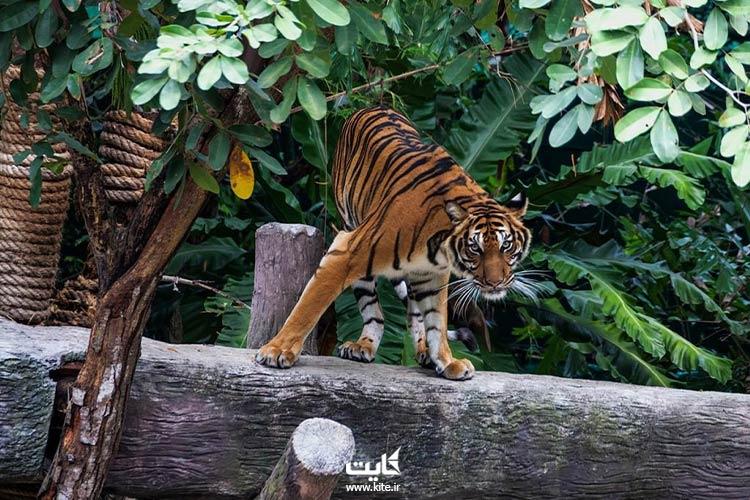 باغ-وحش-خائو-خئو،-از-بهترین-باغ-وحشهای-جنوب-شرقی-آسیا