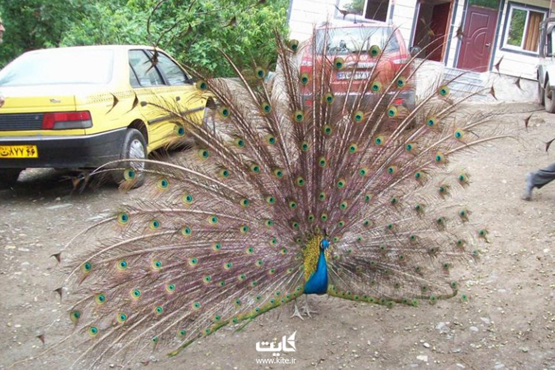 باغ پرندگان ماسال