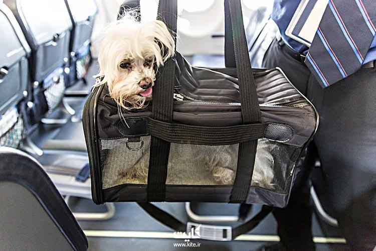 برای-حمل-حیوانات-خانگی-با-هواپیما-نیاز-به-تهیه-چه-مدارکی-است؟