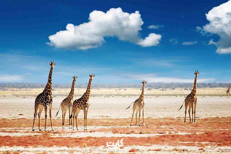 تانزانیا-یکی-از-بهترین-کشورهای-آفریقا