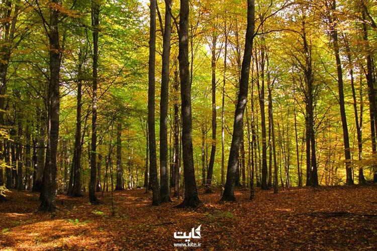 تور یک روزه جنگل راش
