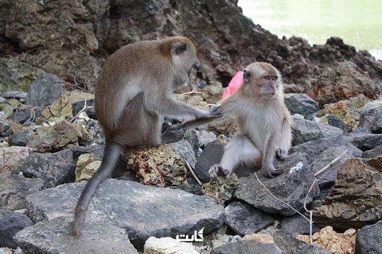 جزیره-میمونها-لنکاوی