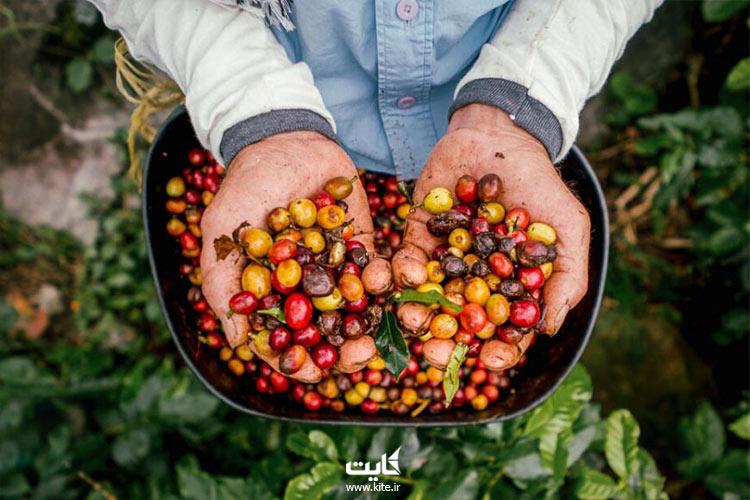 جنگلهای-انبوه-کلمبیا