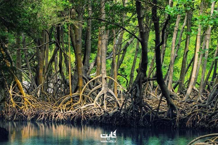 جنگلهای-حرا