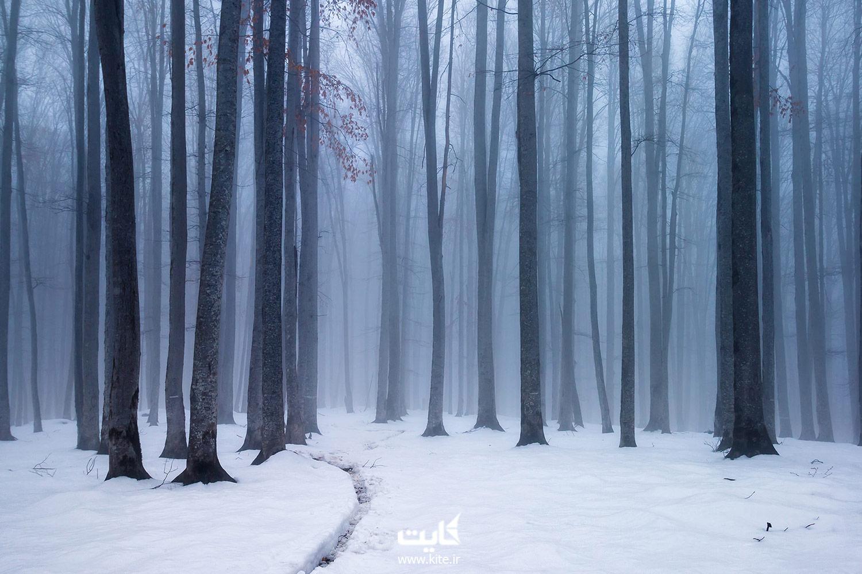 پیاده روی در جنگل