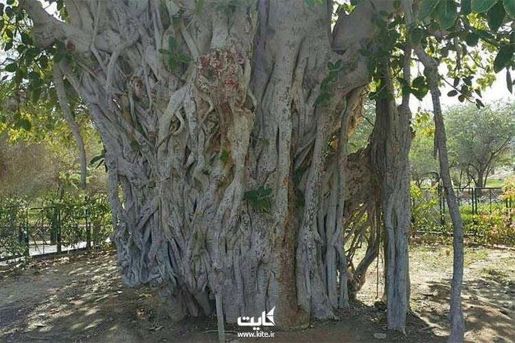 درخت مکرزن