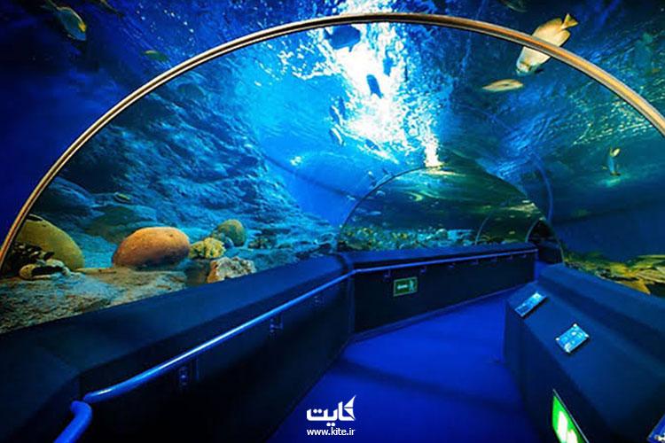 دنیای-زیر-آب-از-جاذبههای-تفریحی-پاتایا