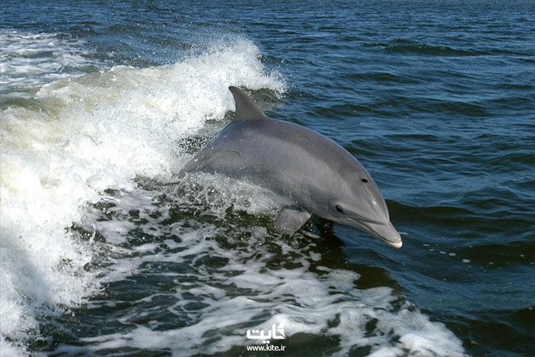 دیدن-دلفینها