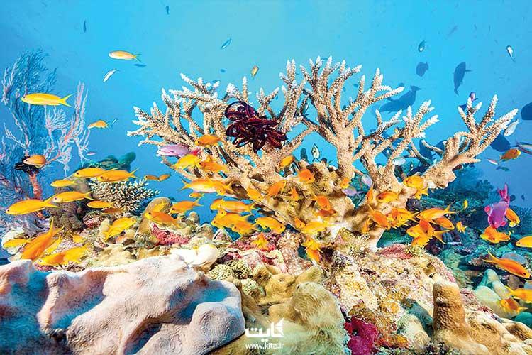 دیواره-بزرگ-مرجانی-استرالیا