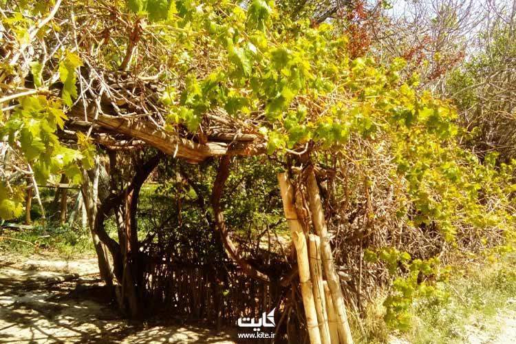 روستای-زریندشت