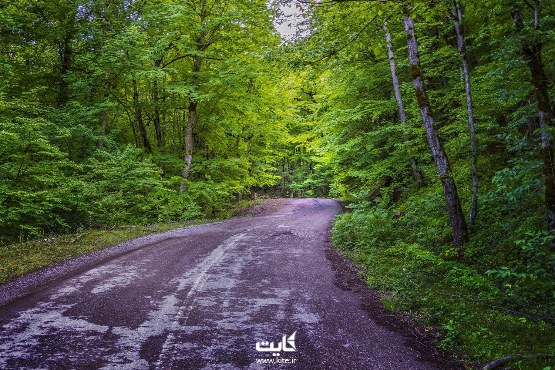 مدارک و وسایلی که در سفر به جنگل باید همراه خود داشته باشید