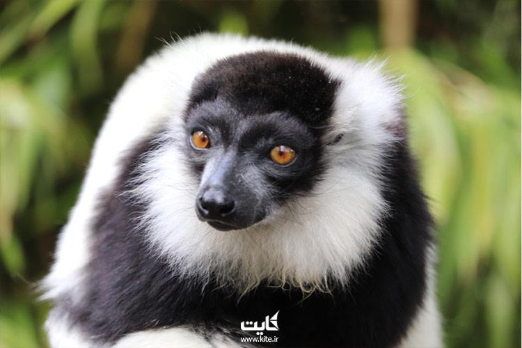 طبیعت-بکر-و-حیرت-انگیز-ماداگاسکار