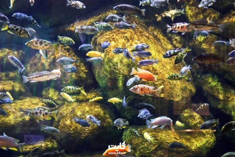 ماهیان-دریای-خزر-در-آکواریوم-فانتستیک-بندر-انزلی