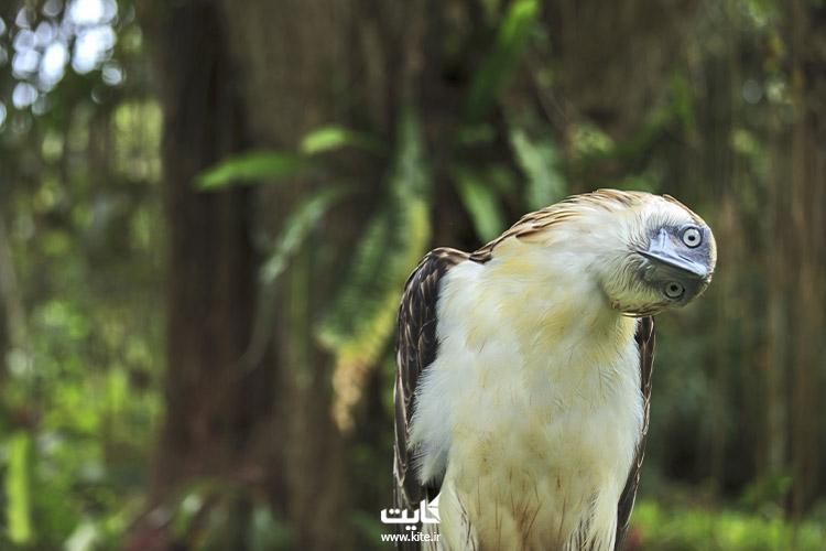 مرکز-عقاب-فیلیپین،-از-بهترین-باغ-وحشهای-جنوب-شرقی-آسیا