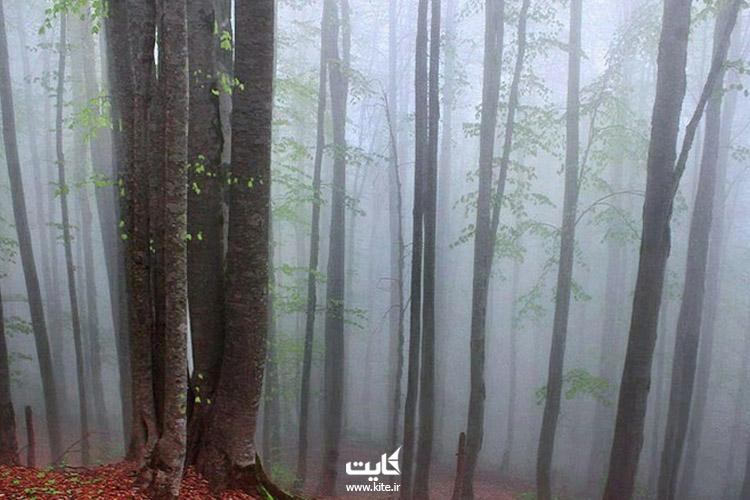 نمای-مه-گرفته-جنگل-راش