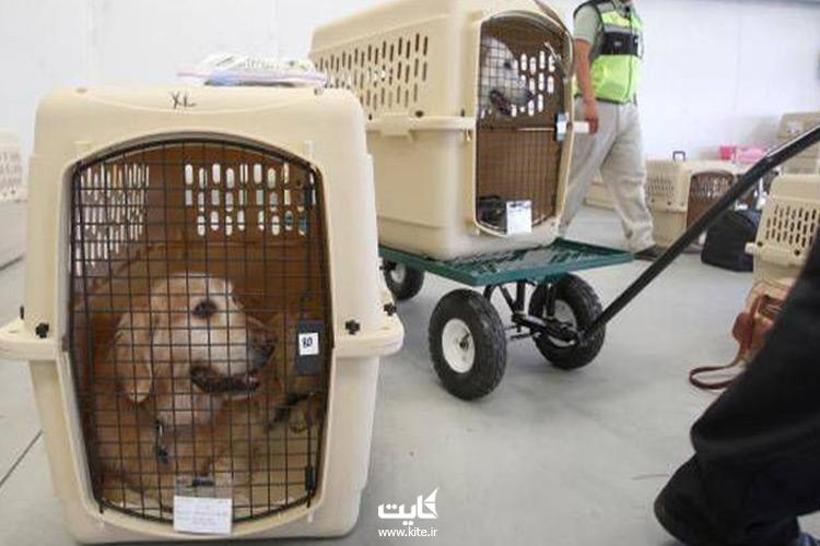 هزینه-حمل-حیوانات-خانگی-با-هواپیما-چقدر-خواهد-بود؟