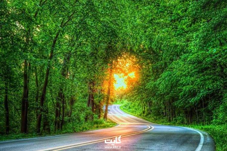 پارک-جنگلی-گیسوم