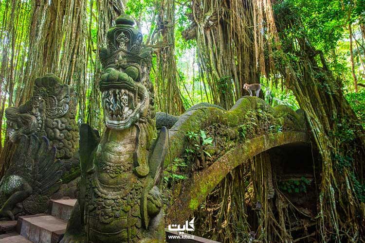 پناهگاه-جنگلی-میمون-مقدس