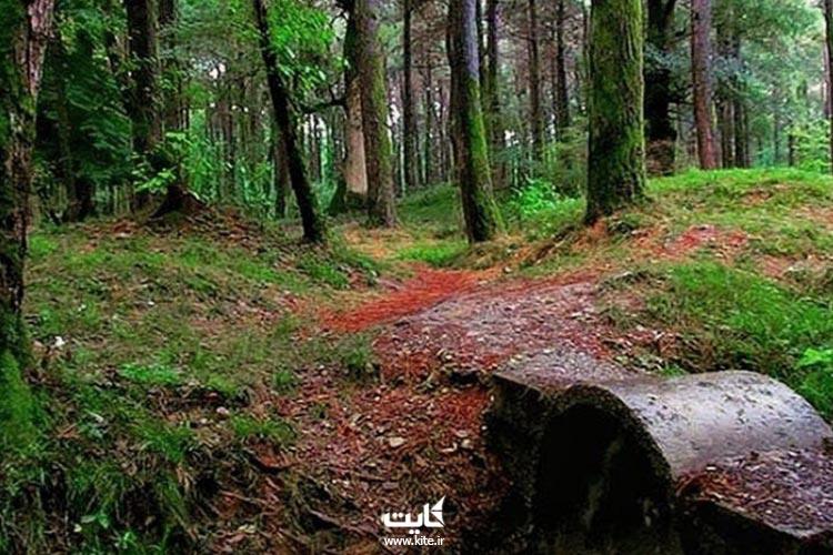 جنگل-گیسوم