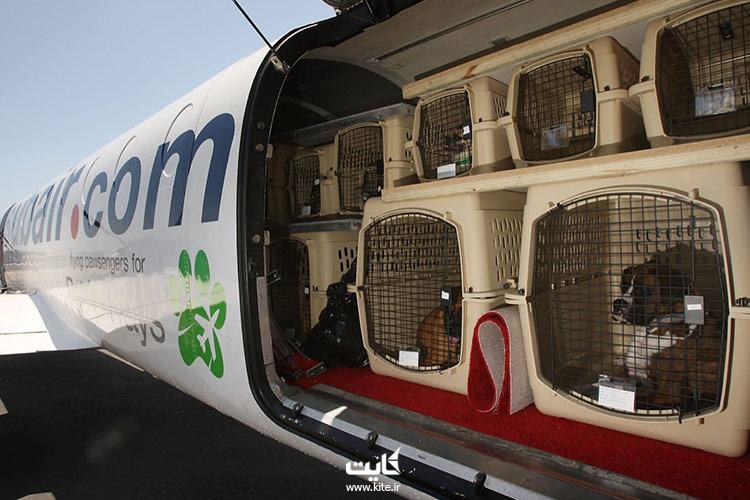 چه-محدودیتهایی-در-حمل-حیوانات-خانگی-با-هواپیما-وجود-دارد؟