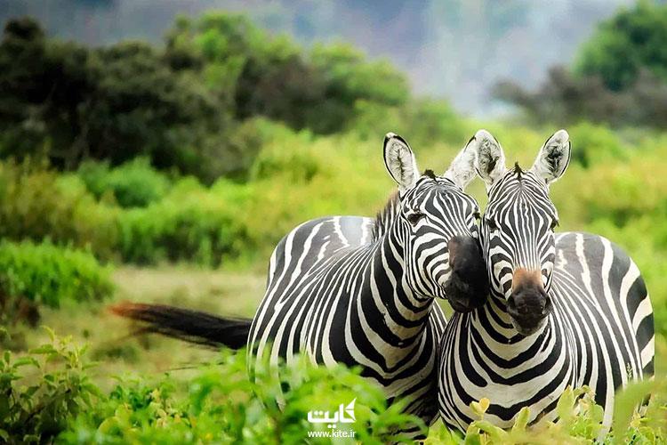 کنیا-یکی-از-بهترین-کشورهای-آفریقا