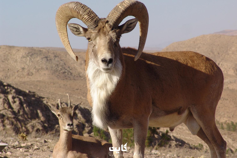 جاذبههای پارک ملی خجیر