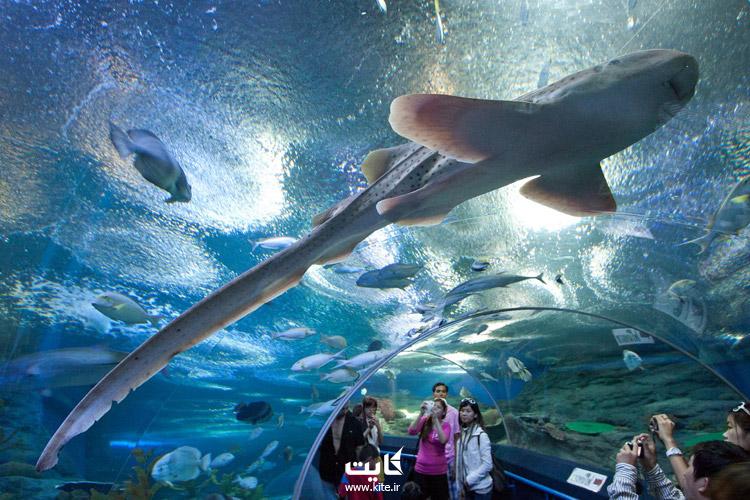 دنیای زیر آب پاتایا (Underwater World Pattaya)