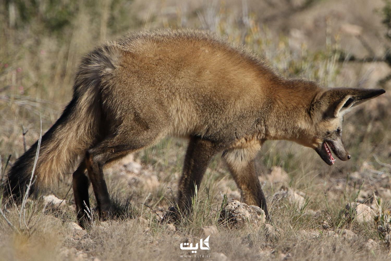 گونههای جانوری پارک ملی خجیر