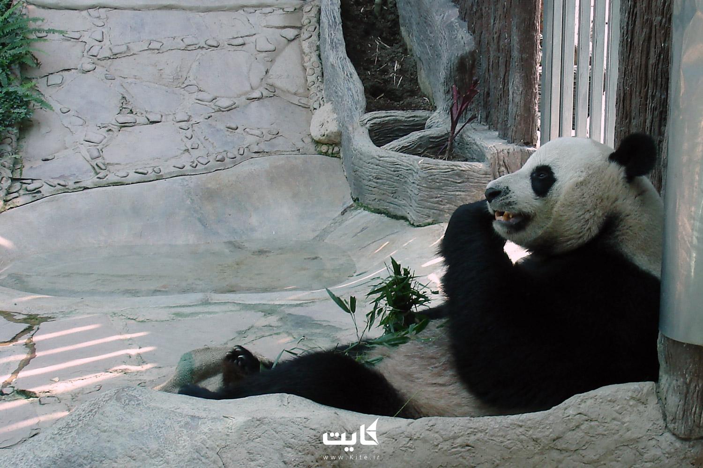 باغوحش چیانگمای