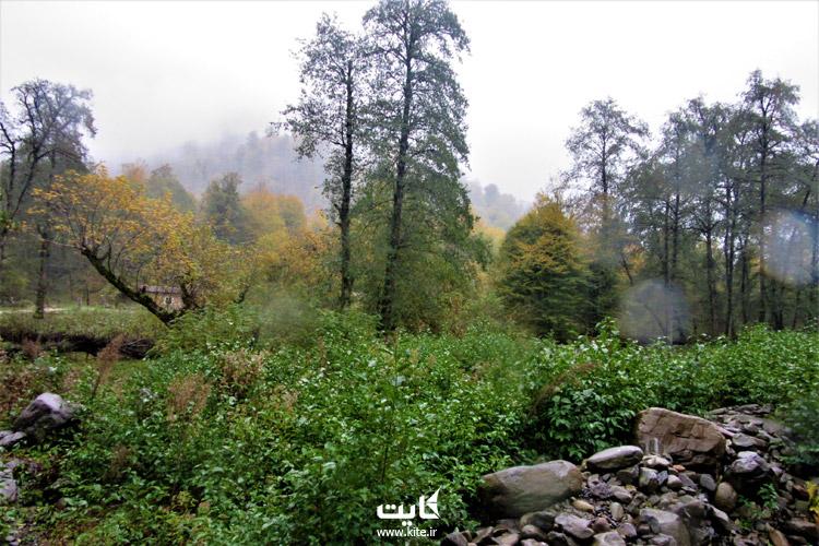 راههای دسترسی و اقامت در جنگل لفور