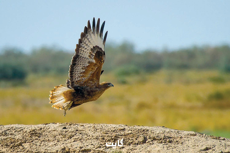 پرندهنگری در پارک ملی خجیر