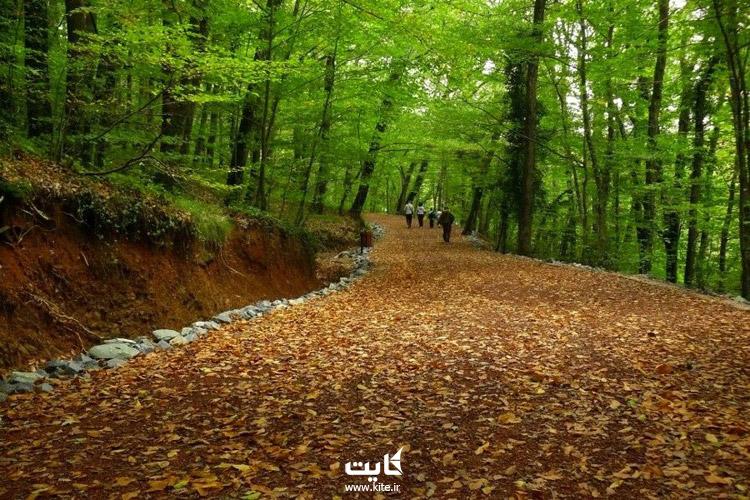 جنگلهای بلگراد (forest Belgrad)