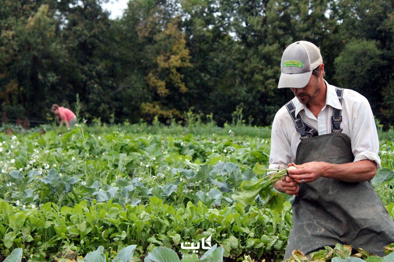 در مزرعه مشغول به کار شوید