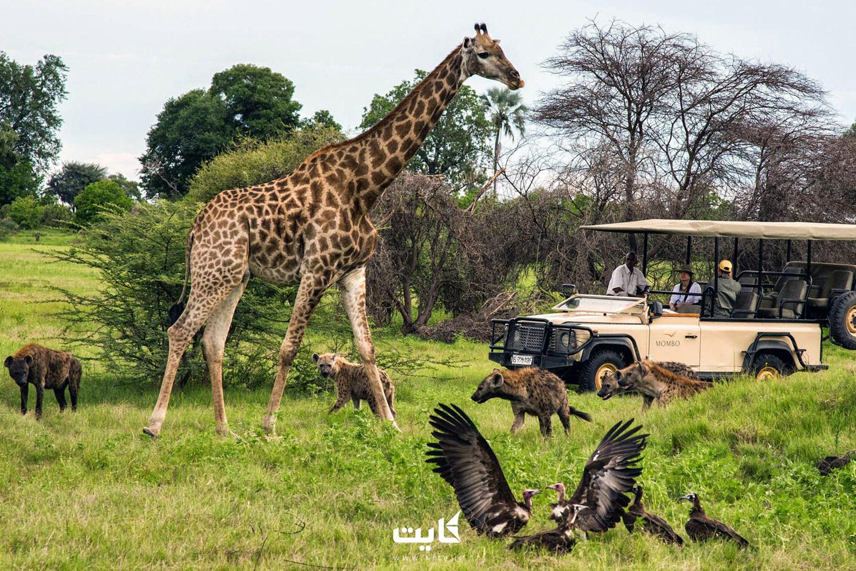 سفر به کشورهای آفریقایی